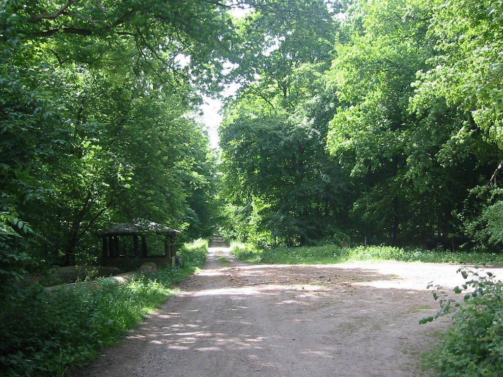 Waldparkplatz von Greifswald